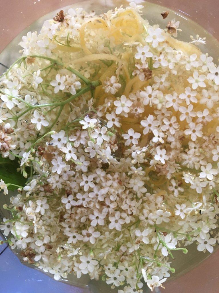 Fleurs de sureau en boisson recette naturo Isabelle Schillig