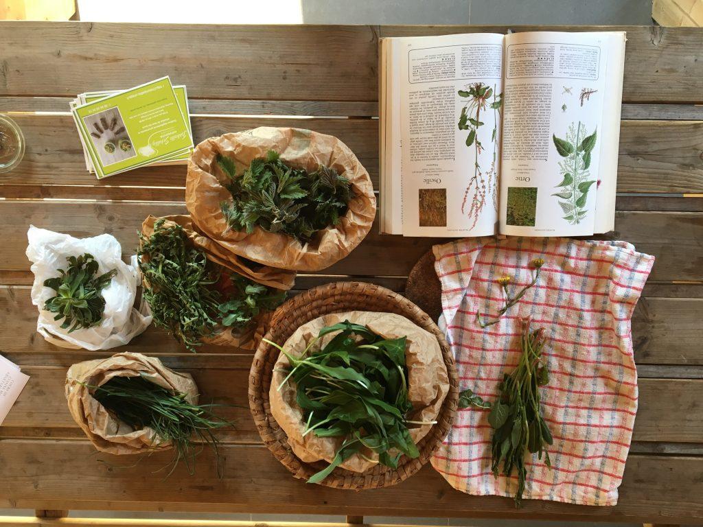 Plantes_sauvages_cueillette_cuisine_Grenoble