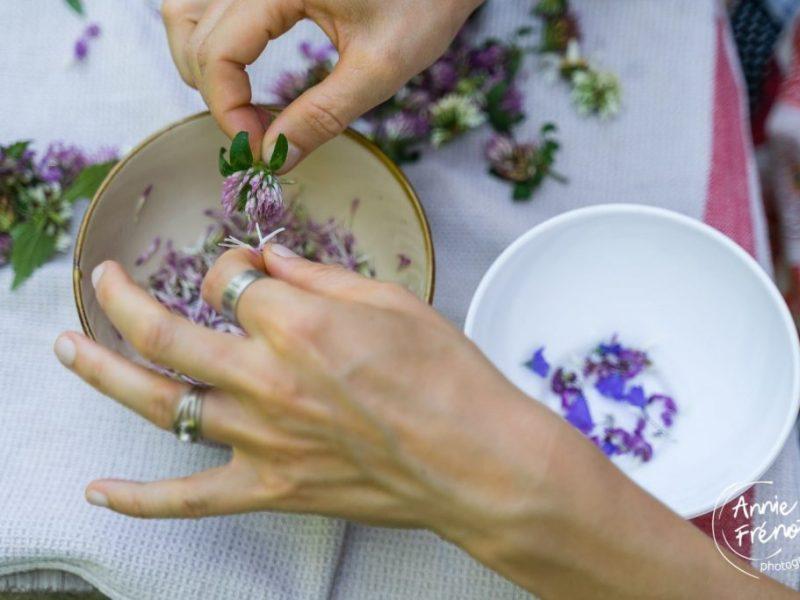journée cueillette plantes sauvages, nature, Uriage, Belledone, photographe Annie Frénot, nature, plantes, cuisine, recettes plantes sauvages